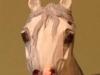 greyaawelshnearfronthead